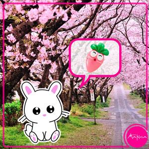 Chica-Manga-Sakura-Carrot-butterfly-clasp-pin